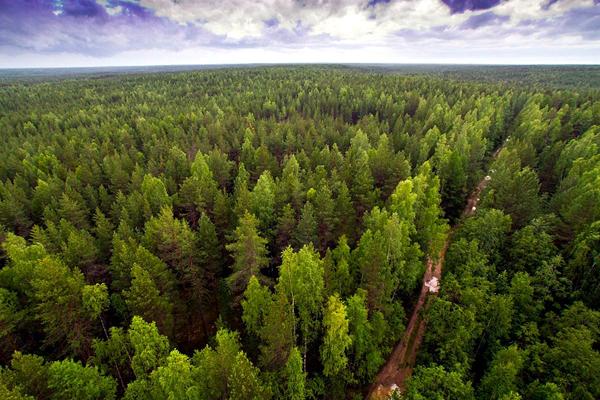 Картинки по запросу леса республики коми